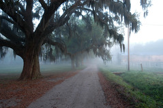 Misty Morning (Sco C. Hansen) Tags: sc fog barn scott oak south low country southcarolina southern spanishmoss d100 hansen beaufort soe lowcountry beaufortcounty scotthansen hebiggestgroup colorphotoaward impressedbeauty flickrphotoaward stockphotoagency beaufortphotographer beaufortphotography hiltonheadphotographer wwwlowcountryphotographynet photostockagency