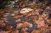 Una destaca (Miquel Gomis) Tags: natura waterfall autumm pentax fontdelamata villalonga cascada water valencia naturaleza otoño tardor k5iis españa agua comunidadvalenciana es