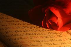 Quran And Rose (mehmetakifguler) Tags: rose gül kerim quran koran qoran İslam kuranı