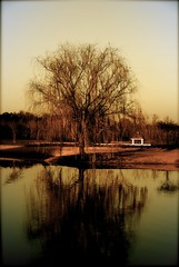 Antique Tree (sunsurfr) Tags: old reflection tree water pond antique alabama aplusphoto sunsurfr