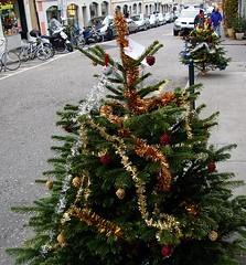 12_2006_tree1