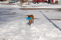 Christmas081-Lucy with Frisbee (jonathonmcdougall) Tags: christmas snow 2006 northpole