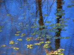 Beseeching Monet ( D L Ennis) Tags: water reflections bravo monet impressionism technique impressionistic abigfave