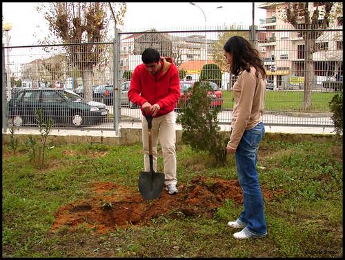 Abrindo buracos para as árvores