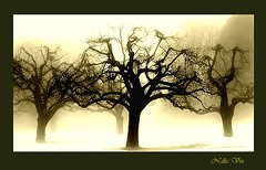 Memory of Trees. Limited Edition Prints.  Nellie Vin . (Nellie Vin) Tags: trees winter light art film fog sepia photoshop landscape photography visions yahoo google still moody shadows seasons framedart branches fineart dream wallart photograph memory trunk impressionism prints yashica enya fineartphotography appletrees printsforsale goldencolor nellievin thememoryoftrees nellievinfineartmagazine collectiblephotography artgallerywork highestpricephotograph fineartprintsforsale