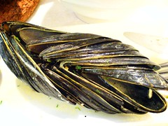 Mussel Shells at Brussel Sprouts