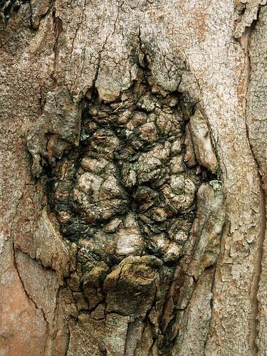 Lisboa - tree knot 1