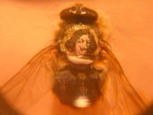 Pintura en la espalda de una mosca