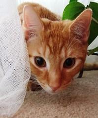 Calvin Hiding