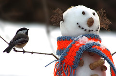 Chickadee and the Snowman (nature55) Tags: winter nature birds outdoors snowman magicdonkey featheryfriday instantfave outdoorfun nature55 abigfave impressedbeauty 12explore