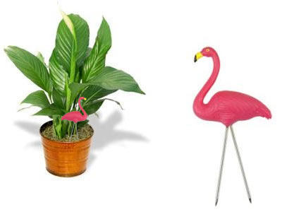 houseplant flamingo