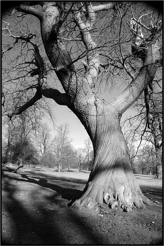 black and white tree photos. Black amp; White Tree