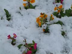 Nunhead Cemetery  3
