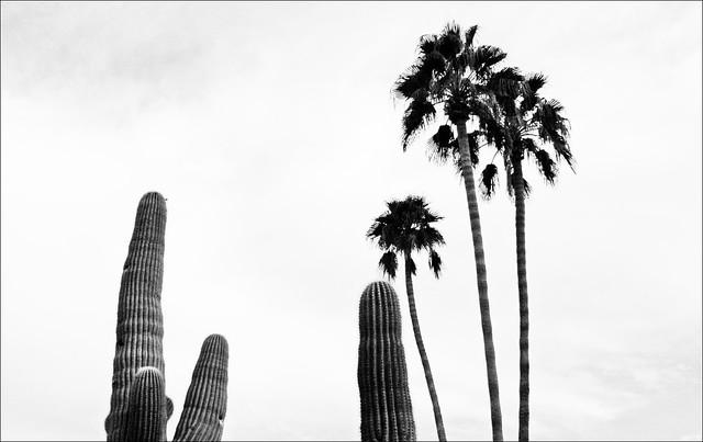 Sepia Cactus #2