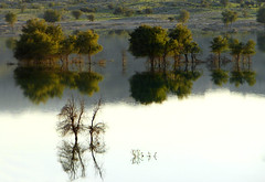 Beauty of The Morass (Somayeh T) Tags: trip reflection tree green water beauty iran reflect morass asalouyeh somayeh upcoming:event=148177 charak gavbandi