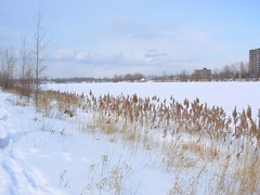 St Lawrence after 35cm fell (reddogs4me) Tags: winter snow montreal stlawrenceriver