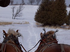 Horse drawen sleigh ride (lockphilip) Tags: winter horses sleigh hangchilly