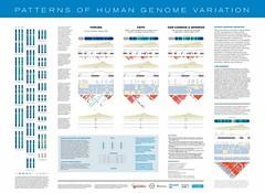 human_genome