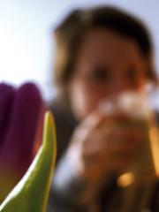 :: hinter lila tulpe :: (einschiessgewehr) Tags: berlin blume frhstck tulpe