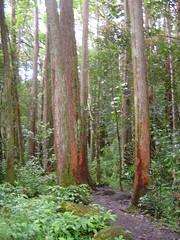 DSC00797 (jeremytheys) Tags: hawaii honeymoon waikikibeach honalulu