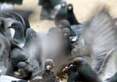 L'enfer c'est les autres (gherm) Tags: paris france canon pigeons sartre s2is gettyimages gherm 0702276803 formatpaysage gettyartistpicks