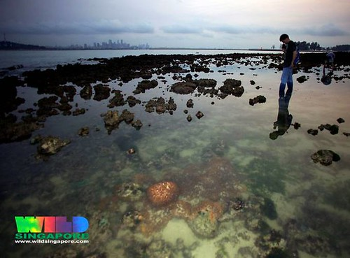 Living reefs of St. John's Island, Singapore