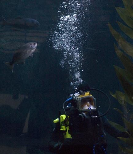 Diver Host