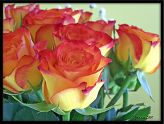 With Love... (welshlady) Tags: flowers roses ilovenature memorial 100views happybirthday bloom 200views trophy bouquet bandstand mothersday florafauna standingovation helluva captainscott blueribbonwinner top20flowers bestwishes welshlady 10faves instantfave theworldthroughmyeyes mywinner abigfave top20flowers20 welshflickrcymru flickrdiamond