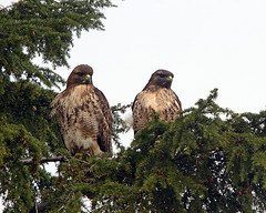 Mr. & Mrs. R.T. Hawk  (from the front) - by Rick Leche
