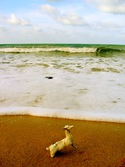 Beached Sea Horse? (dinesh_75000) Tags: