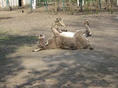 Editie speciala pentru iubitorii de animale - 2 galerii - 290 poze