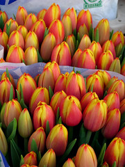 The Dutch national flower at the Albert Cuypmarkt