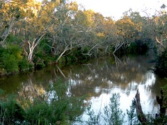 Dark and mysterious bends of the upper Yarra (PsJeremy) Tags: yarra gum tree river hour golden water reflection australia victorias mysteries deep