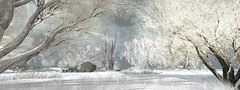 snowy meadows (flubs) Tags: nature outdoor landscape dreamy winter snow flickr surreal