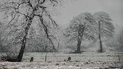 Rübke - Winterlandschaft 6 (Pana53) Tags: photographedbypana53 pana53 naturfoto naturundlandschaftsfotografie naturfotografie jahreszeit wintertime winter winterlandschaft winterlandscape rübke bäume pflanzen natur wiesen felder nikon nikond810 raureif eis frost kälte rehe outdoor wiese feld