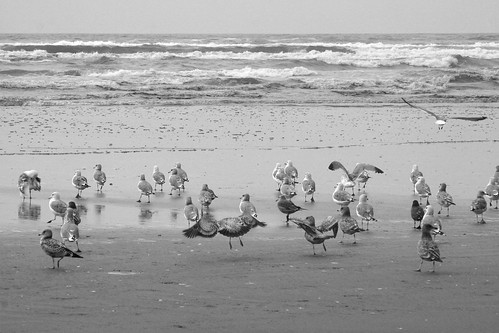 Seagulls at Seabrook