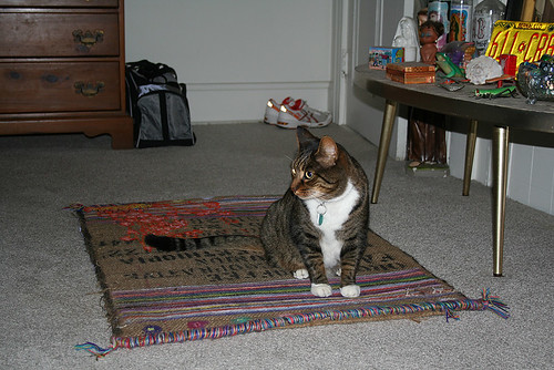 simon on the magic carpet