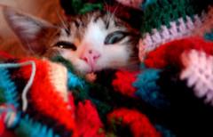 """COSTRA"" (alfonsoso) Tags: color lana cat ojo alfonso gato manta costra aplusphoto alfonsoso superhearts"
