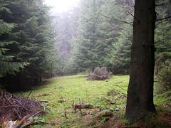 Vimaladhatu woods 6