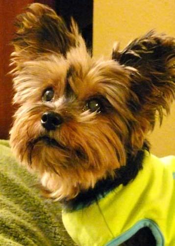 my precious pup :)
