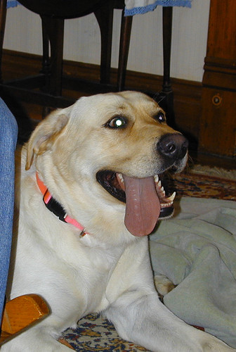 hooooozagooddoggie