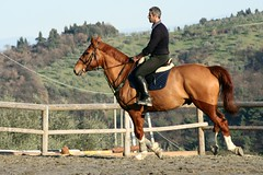 IMG_2526 (montalgeto) Tags: horse quick cristian gallop