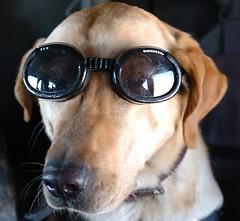 Hero Dog - by The U.S. Army