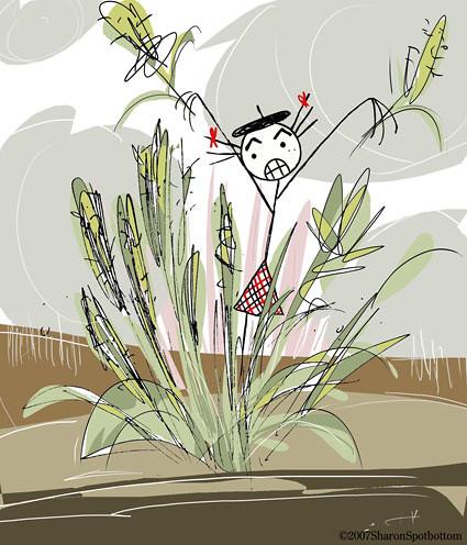sharon-pampas-grass