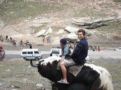 Riding a Yak in India