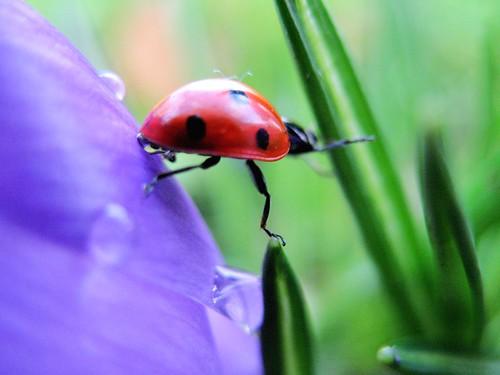 Ladybird clambering