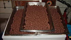 Making seed balls - In trays for drying