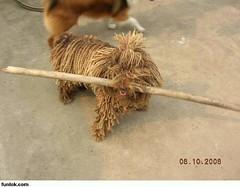 mop dog 03