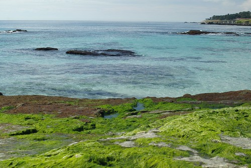 Algenschlick am blauen Wasser, Foto: cwgoodroe