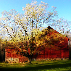 Daffodil Barn II (farlane) Tags: red yellow barn daffodil twelve leelanau leelanaudotcom